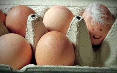 Mag je eiersalade eten als je zwanger bent?