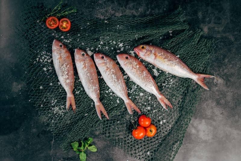 Vis eten – zelfs tonijn – tijdens de zwangerschap gekoppeld aan een betere gezondheid van de hersenen